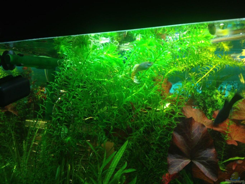 aquarium wurzel selber machen – zuhause image idee