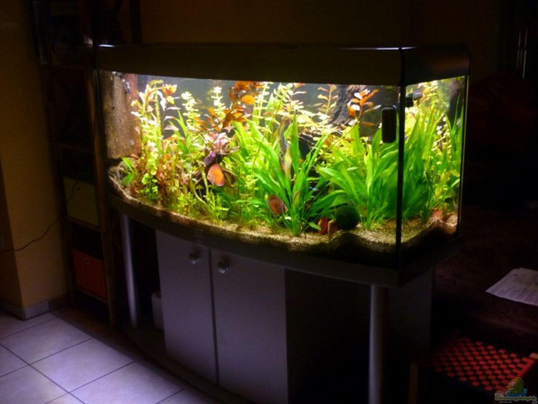 aquarium von dirkvader71 becken 23059. Black Bedroom Furniture Sets. Home Design Ideas