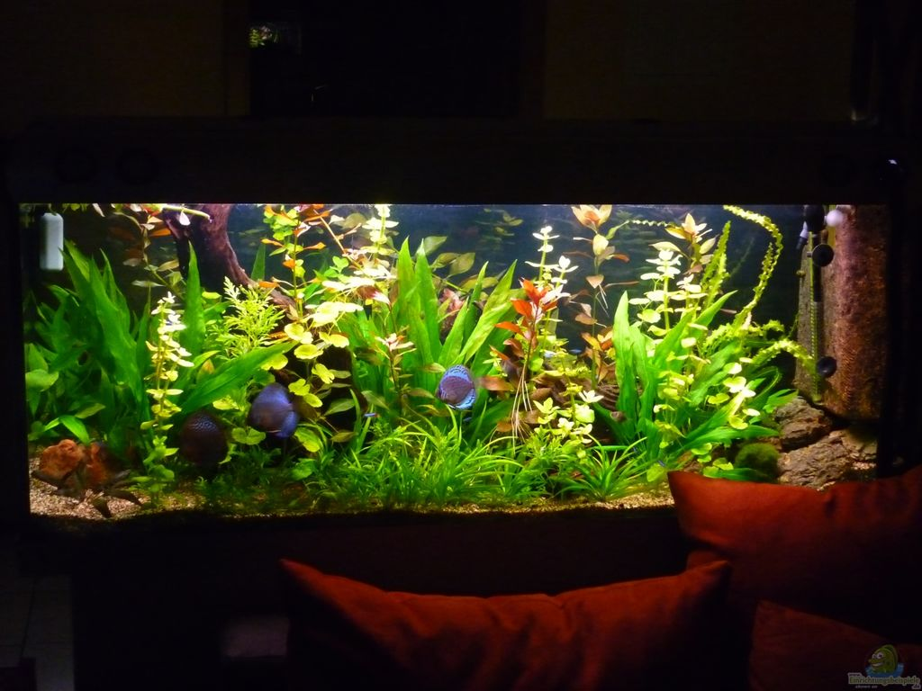 Pin Aquarium einrichten on Pinterest