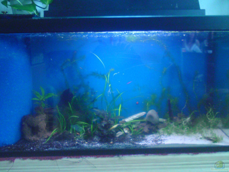 aquarium von pinkie einlaufphase naturbecken. Black Bedroom Furniture Sets. Home Design Ideas