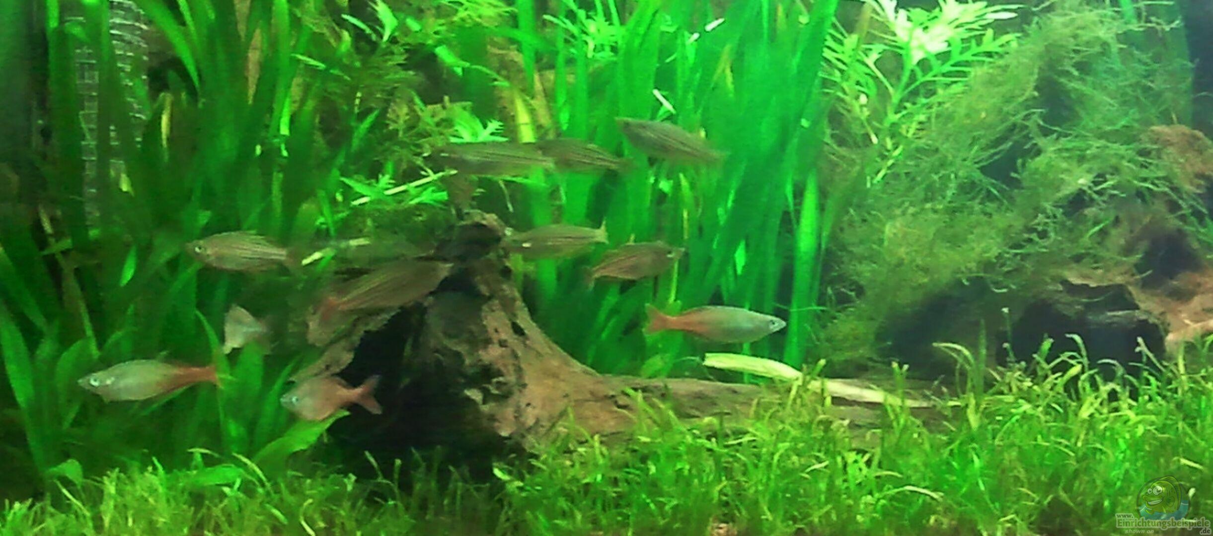 rainbowfan 23103 underwater rainbows nurnoch beispiel. Black Bedroom Furniture Sets. Home Design Ideas