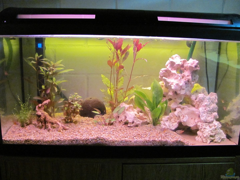 120 liter aquarium fluval 120 litre aquarium in. Black Bedroom Furniture Sets. Home Design Ideas