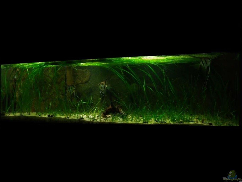 aquarium von ph neutral heimat der segelflosser. Black Bedroom Furniture Sets. Home Design Ideas