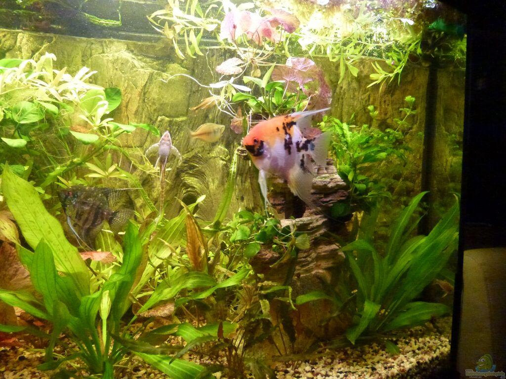 Aquarium Einrichten Für Regenbogenfische Ein besuch im