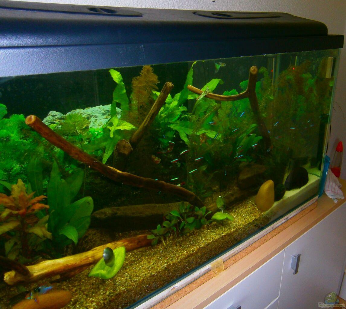 Aquarium von dal3838 becken 23166 for Aquarium becken