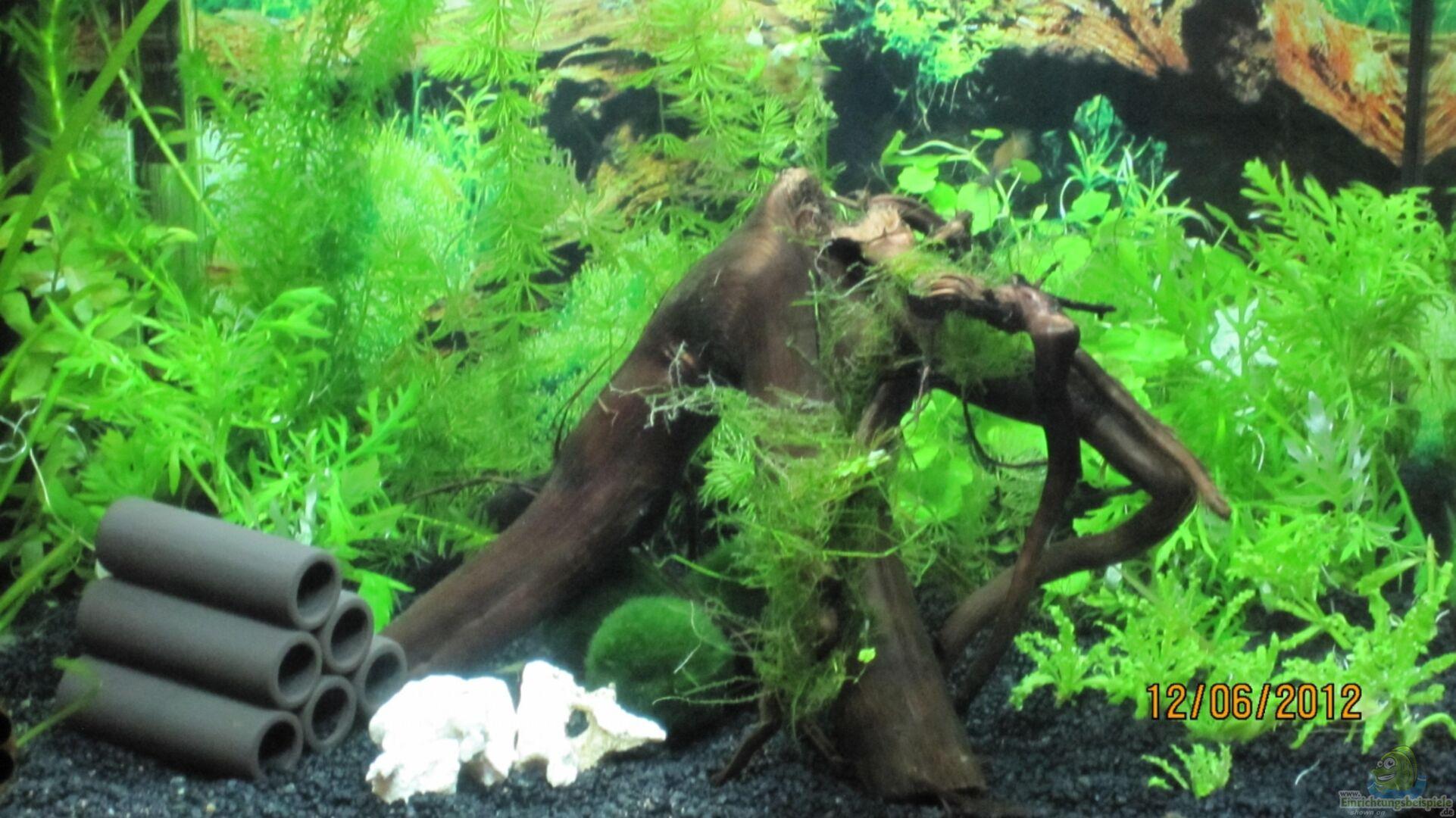 aquarium von wasserfloh 1 23174 mein kleines reich. Black Bedroom Furniture Sets. Home Design Ideas