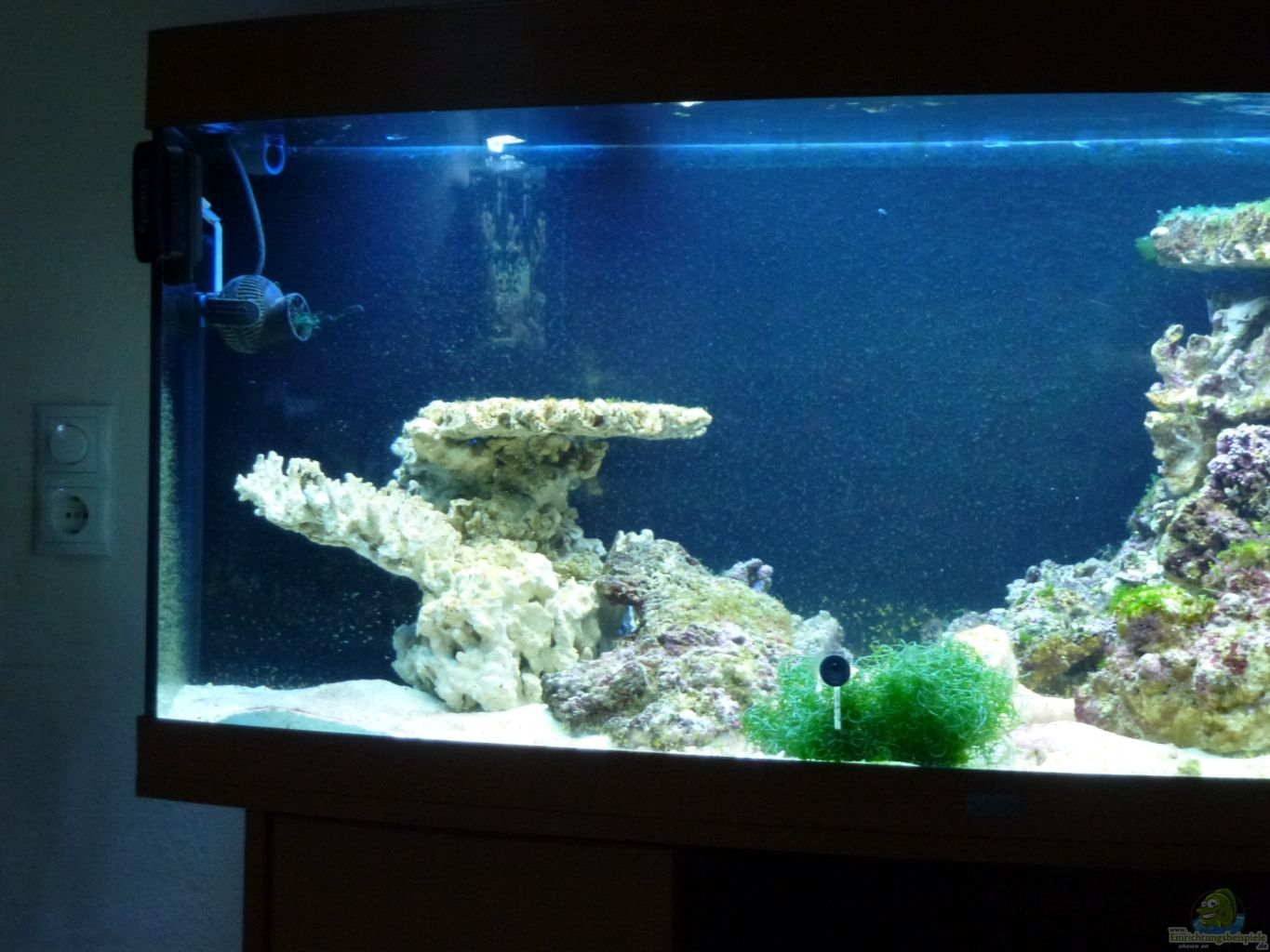 Conductivity Of Reef Tank : Example no from the category salt water