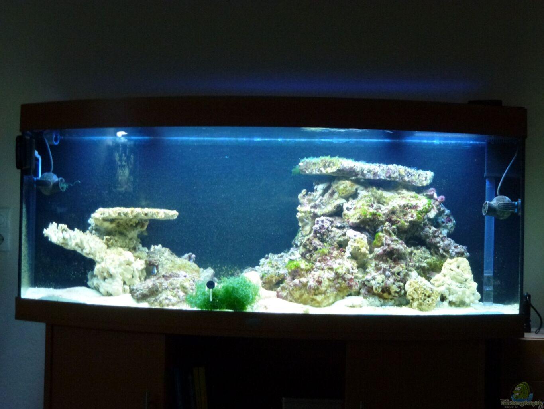 Aquarium von silverlight wohnzimmer riff - Aquarium wohnzimmer ...