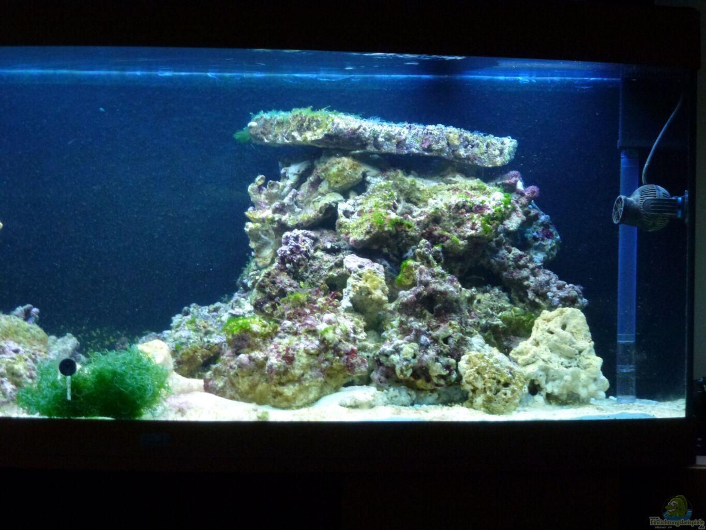 Aquarium Wohnzimmer Dekoration : Aquarium von silverlight wohnzimmer riff