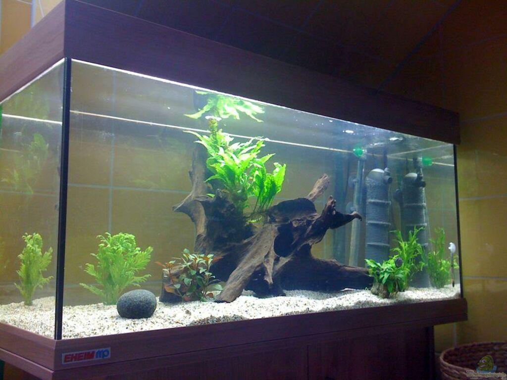 aquarium von timo aqua guppyaquarium 180l. Black Bedroom Furniture Sets. Home Design Ideas