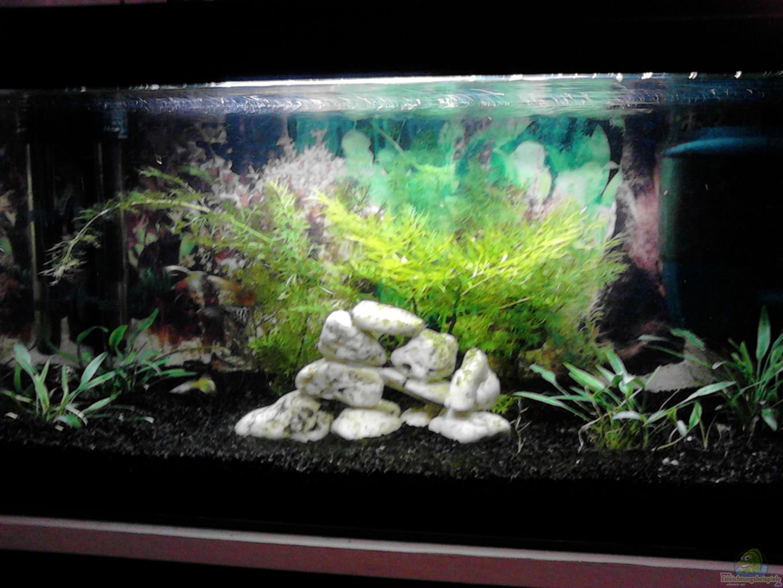 Esempio n 23196 dal categoria comunitari for Aquarium einrichtung