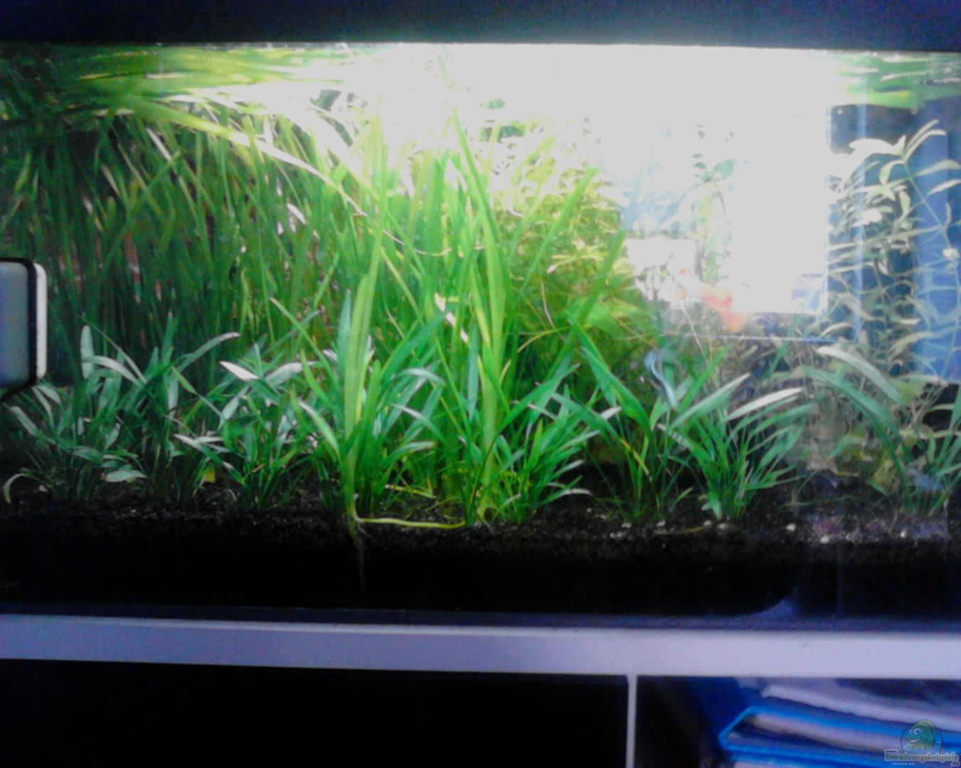 mein aquarium nachdem alle pflanzen gut gewachsen sind vor der letzten nderung aus mein neues. Black Bedroom Furniture Sets. Home Design Ideas