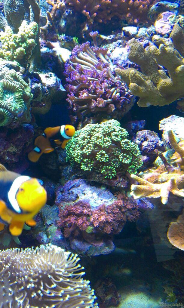 aquarium von jens m hlenbeck juwel trigon 350. Black Bedroom Furniture Sets. Home Design Ideas