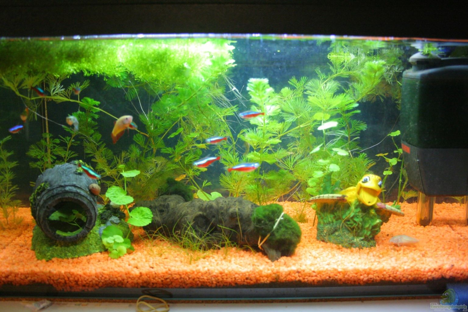 Aquarium von jeany mein erstes becken for Mein aquarium