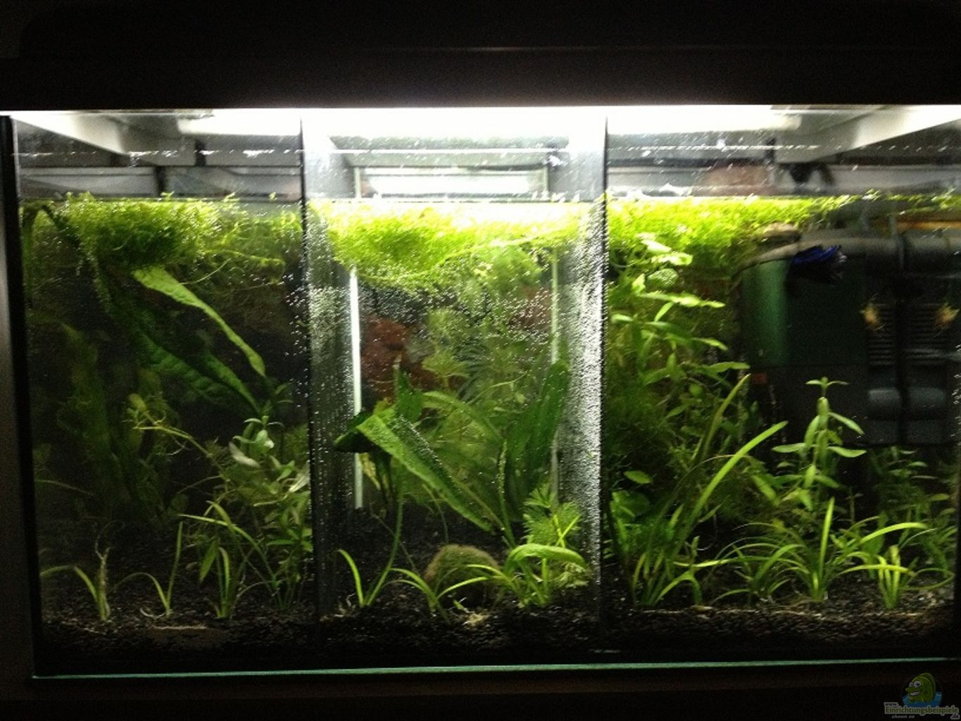 Example no 23277 from the category community tanks for Betta fish tank decorations