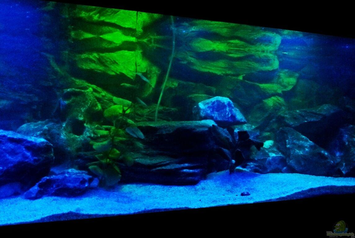 aquarium von wensday malawibecken. Black Bedroom Furniture Sets. Home Design Ideas