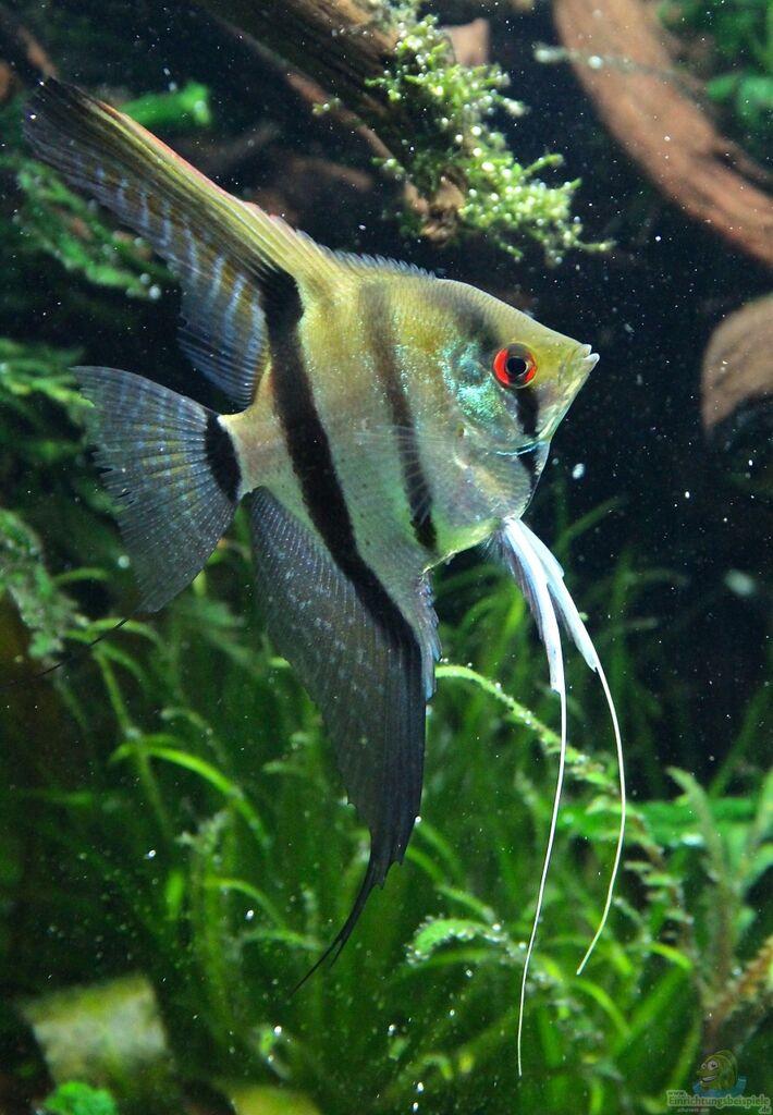 Example no 23304 from the category aquascaping for Skalar aquarium