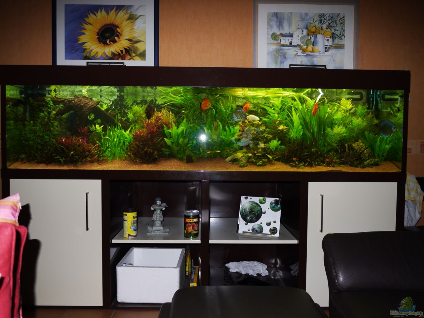 aquarium von mella diskusbecken. Black Bedroom Furniture Sets. Home Design Ideas