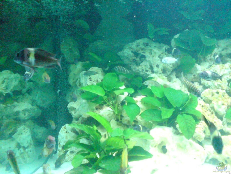 aquarium von daniel mechsner becken 2335. Black Bedroom Furniture Sets. Home Design Ideas