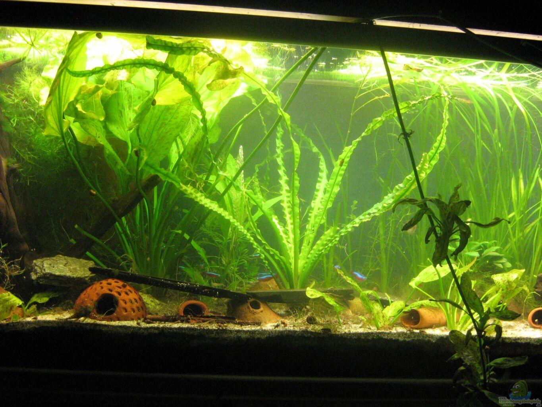 aquarium von chrisi01 250l im wohnzimmer. Black Bedroom Furniture Sets. Home Design Ideas