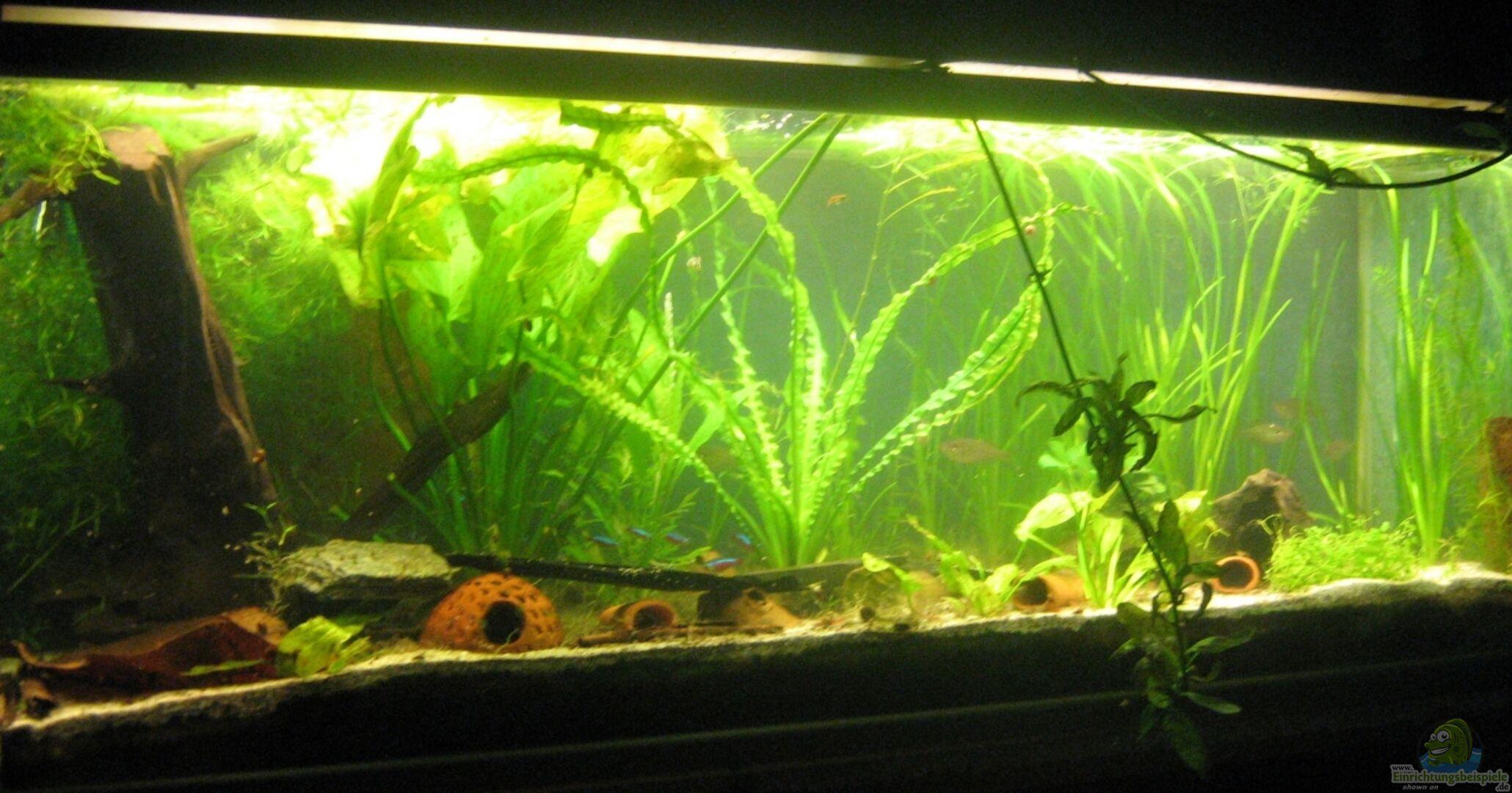 Aquarium von chrisi01 23356 250l im wohnzimmer - Aquarium wohnzimmer ...