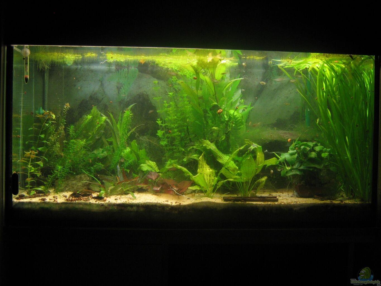 aquarium von chrisi01 250l im schlafzimmer. Black Bedroom Furniture Sets. Home Design Ideas