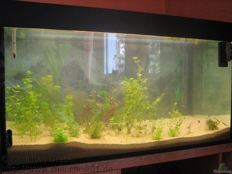 aquarium von chrisi01 23371 250l im schlafzimmer. Black Bedroom Furniture Sets. Home Design Ideas