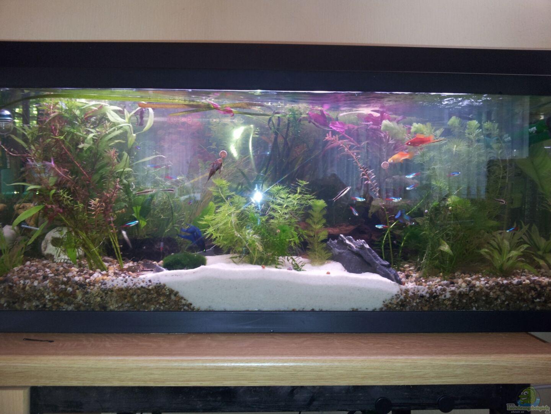 aquarium von snawatz becken 23418. Black Bedroom Furniture Sets. Home Design Ideas