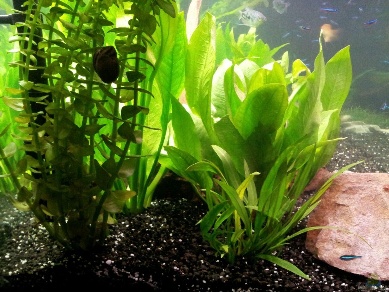 aquarium von krolig becken wama. Black Bedroom Furniture Sets. Home Design Ideas
