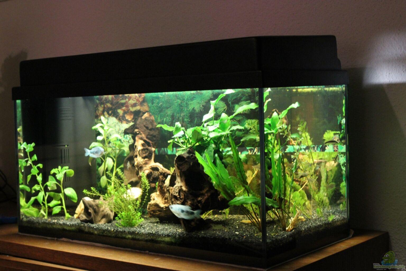 Schwarzer kies aquarium
