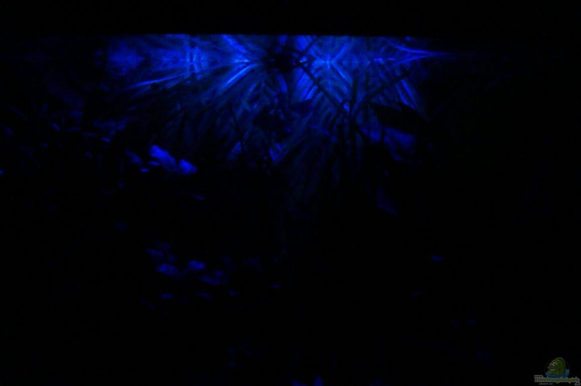 einrichtungsbeispiele f r aquarien mit led mondlicht. Black Bedroom Furniture Sets. Home Design Ideas