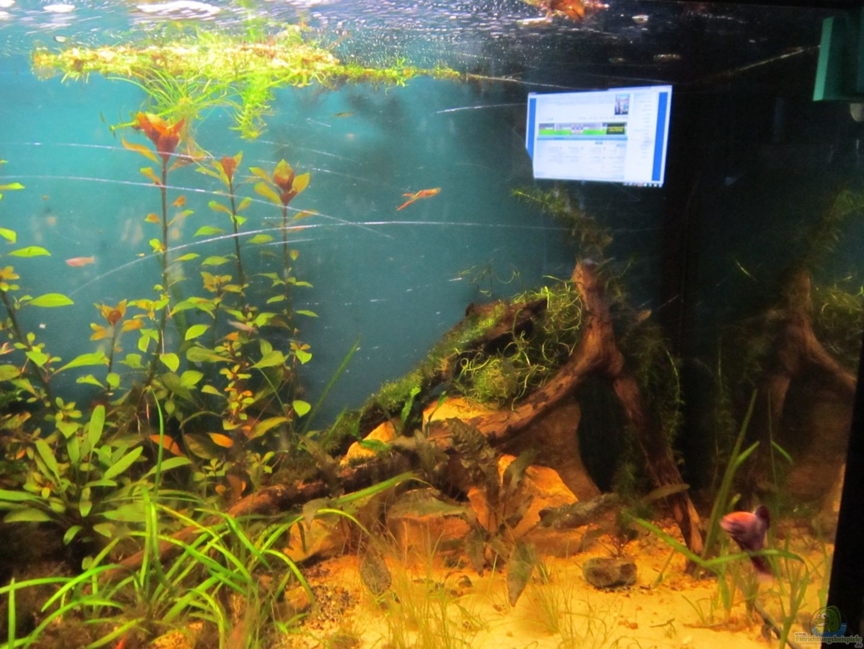 Aquarium von shazrak becken 23505 for Aquarium becken