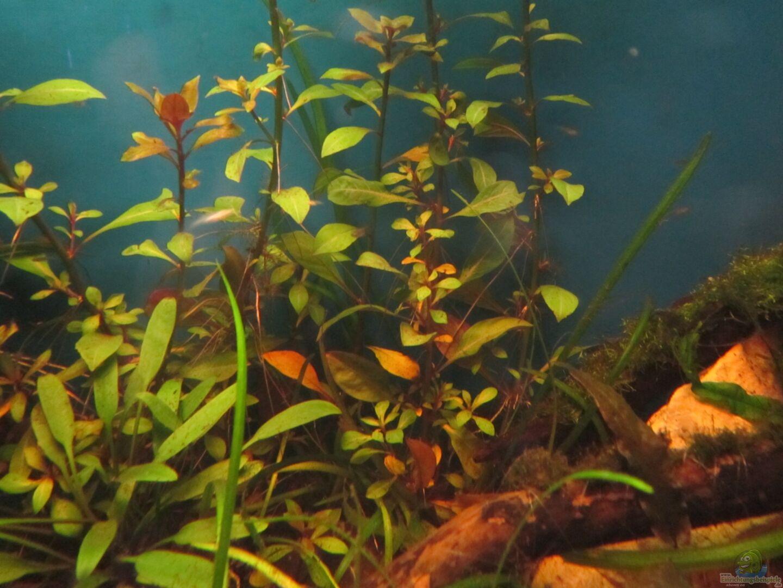 aquarium von shazrak becken 23505. Black Bedroom Furniture Sets. Home Design Ideas