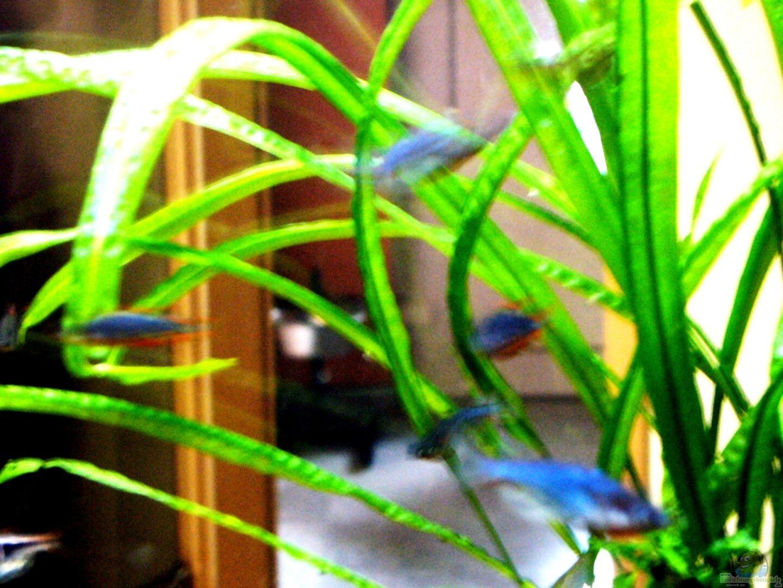 aquarium von jedy becken 23534. Black Bedroom Furniture Sets. Home Design Ideas