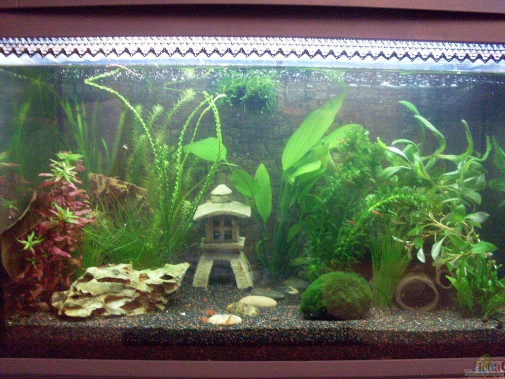 Aquarium von brausefisch japanischer garnelengarten for Zierfische hannover