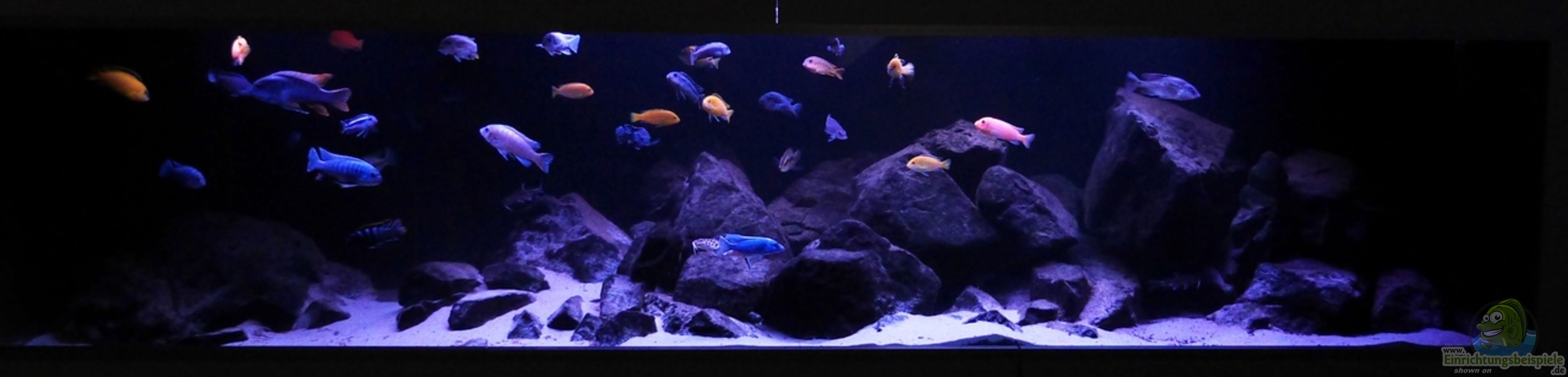 aquarium von cariba 23663 malawibiotop liter. Black Bedroom Furniture Sets. Home Design Ideas