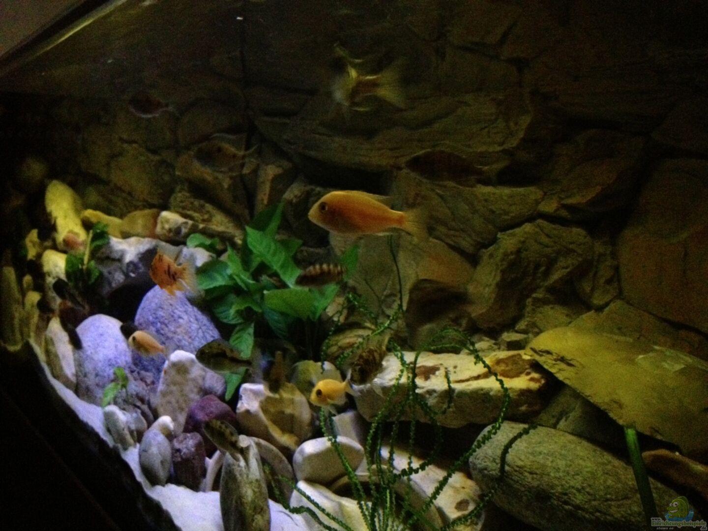Aquarium von alexander leixner becken 23671 for Aquarium becken
