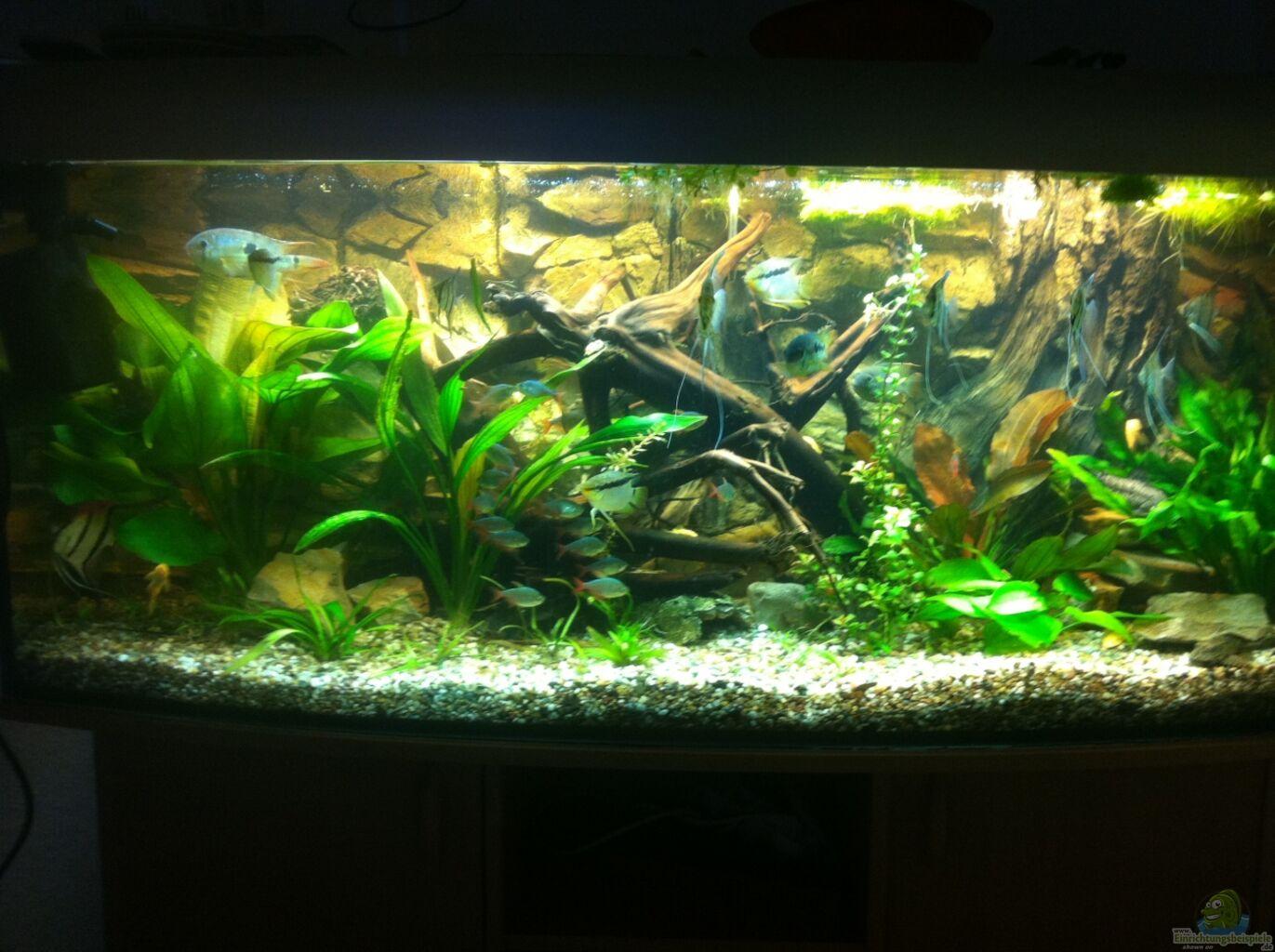 aquarium von red l mein 450l amazonasbecken. Black Bedroom Furniture Sets. Home Design Ideas