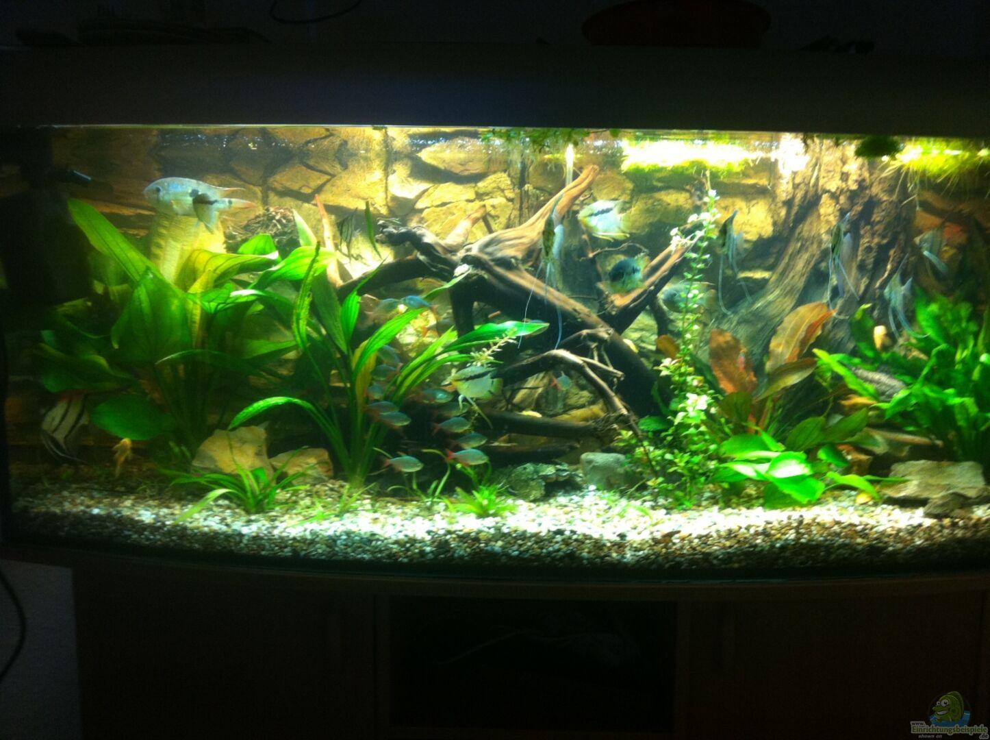 aquarium von red l 23736 mein 450l amazonasbecken. Black Bedroom Furniture Sets. Home Design Ideas