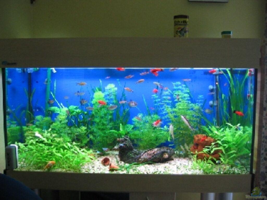 aquarium neu einrichten wohin mit den fischen industrie schmutzwasser tauchpumpen. Black Bedroom Furniture Sets. Home Design Ideas