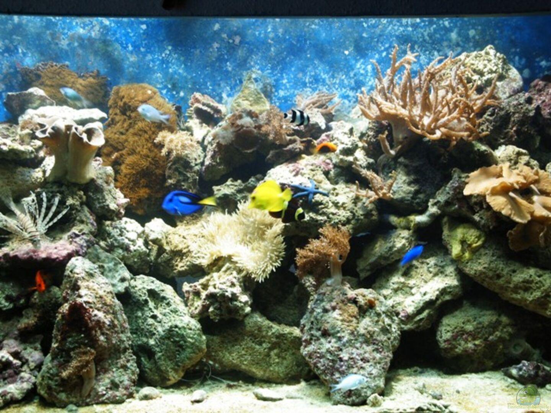 aquarium von katja gra er becken 2382. Black Bedroom Furniture Sets. Home Design Ideas