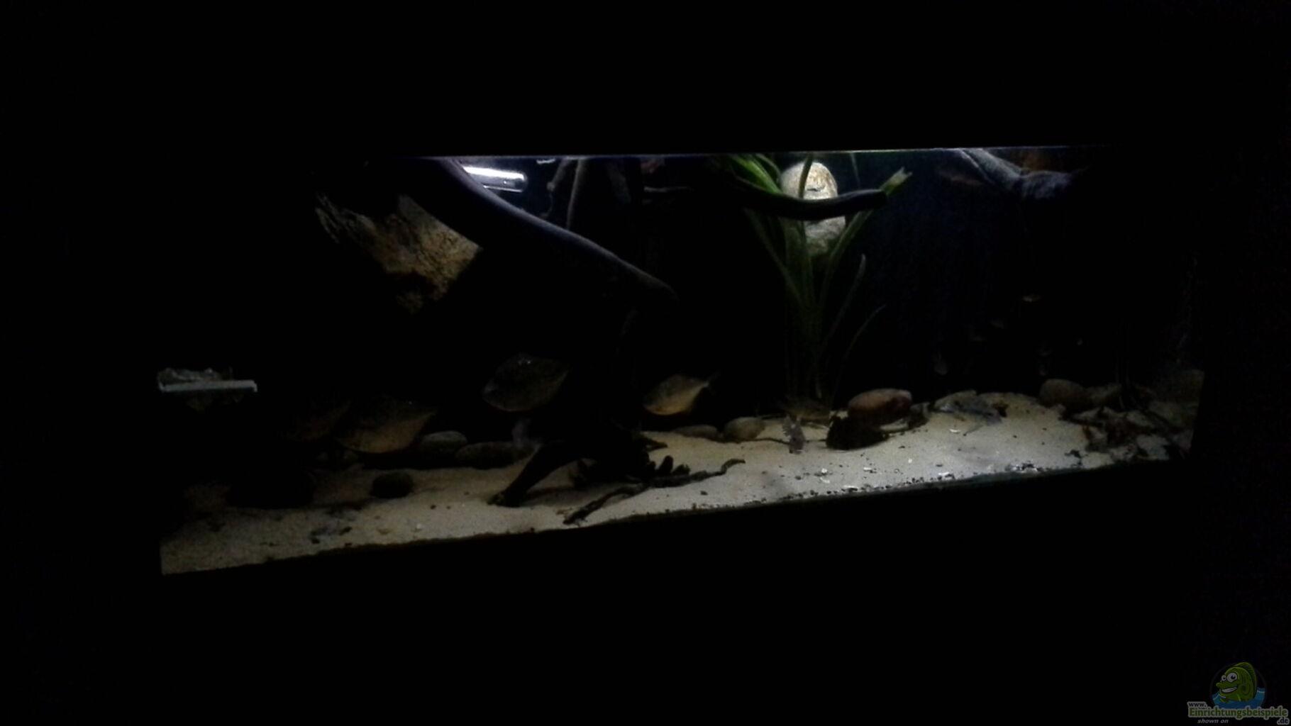 bersicht ber die aquariumbilder aus den 8646 beispielen seite 113. Black Bedroom Furniture Sets. Home Design Ideas