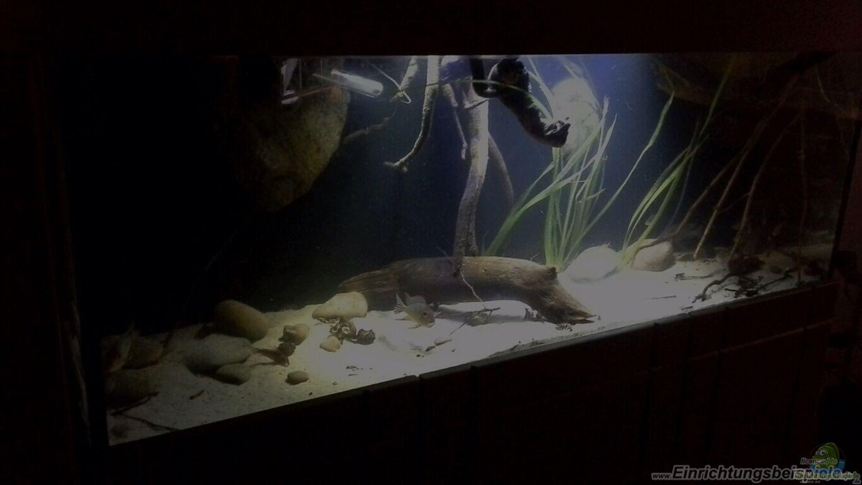 aquarium von dominik wexenberger gibt es nicht mehr. Black Bedroom Furniture Sets. Home Design Ideas