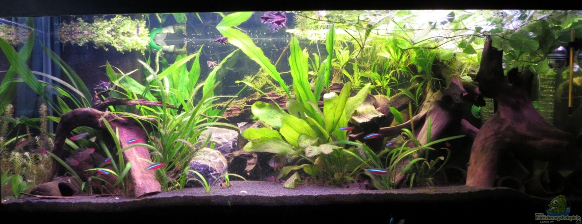 Aquarium von jan s rio ja os aufgel st for Zierfische hannover