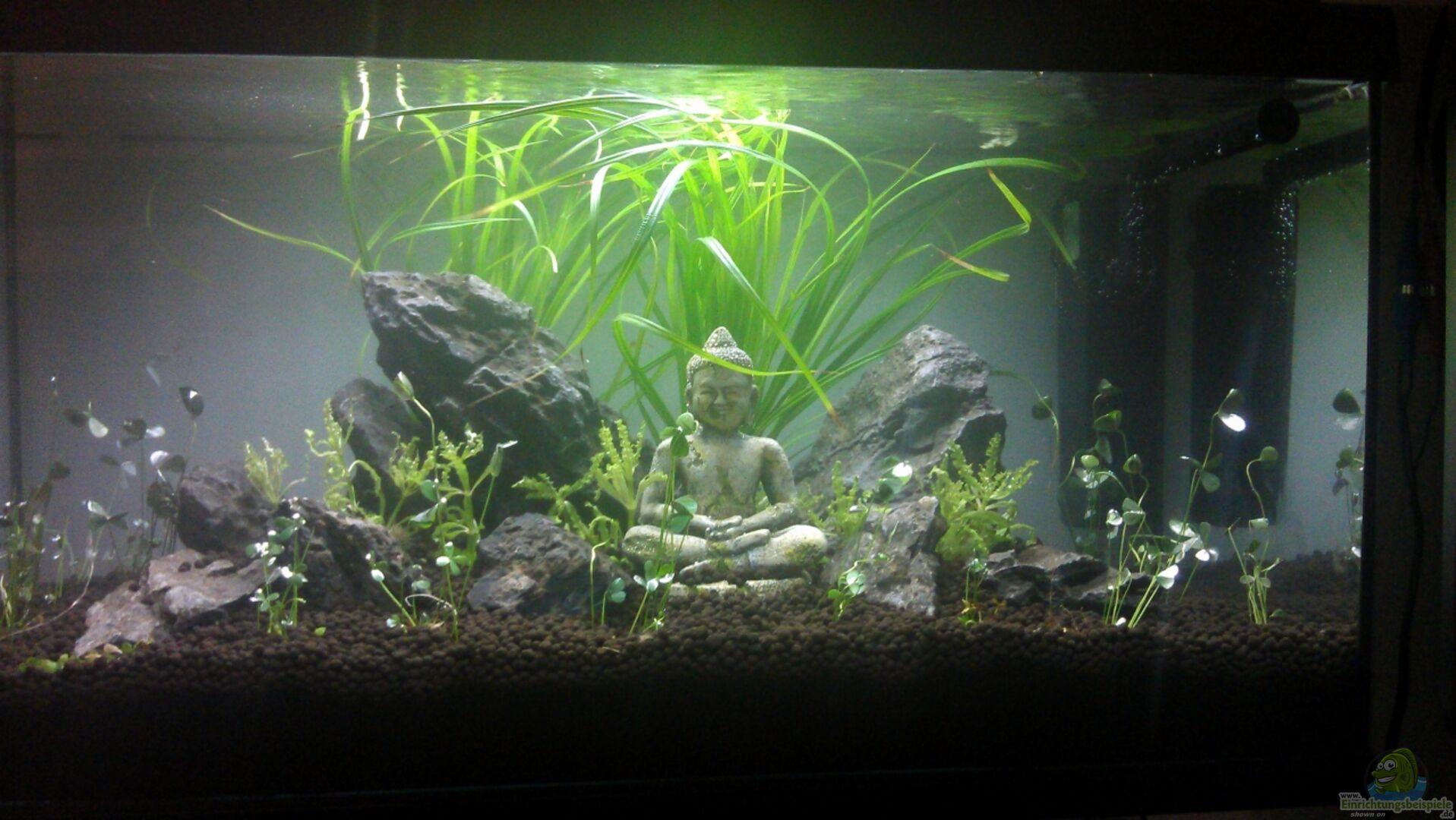 aquarium von georg1983 becken 23944. Black Bedroom Furniture Sets. Home Design Ideas