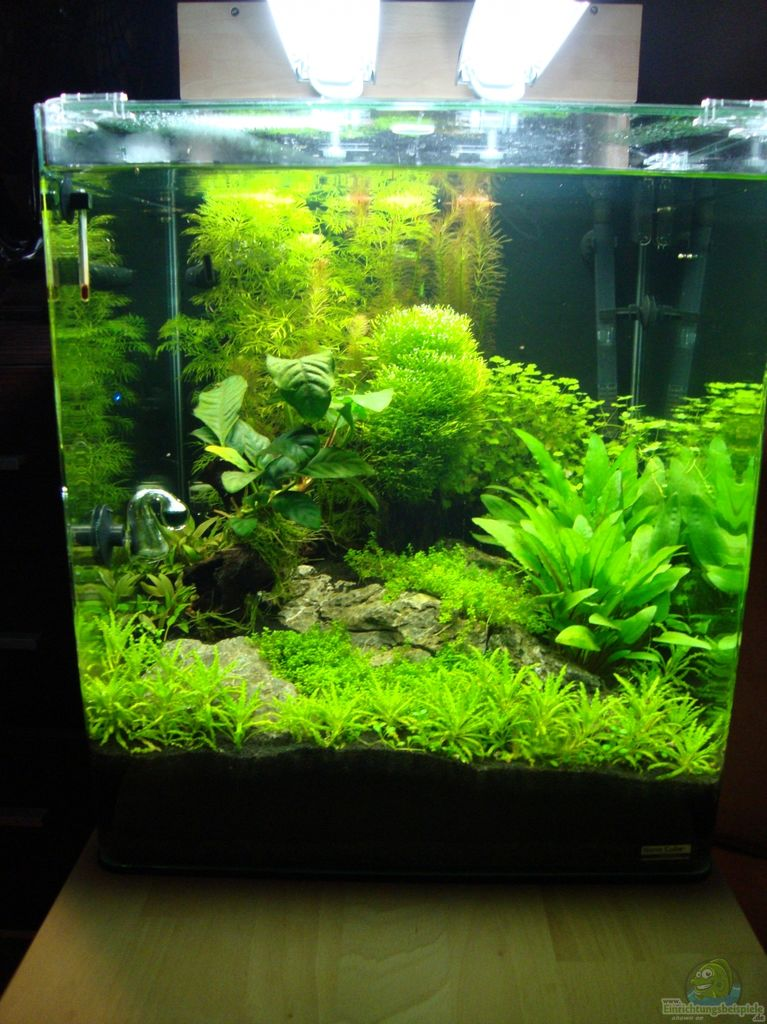 Example no 23946 from the category invertebrates for Decoration aquarium 60 litres