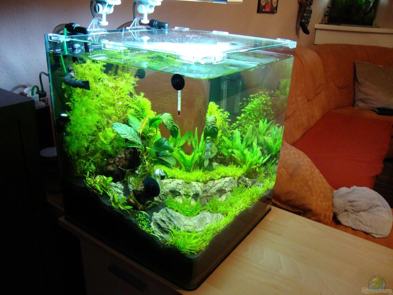 aquarium von christoph luz nano cube 60 liter. Black Bedroom Furniture Sets. Home Design Ideas