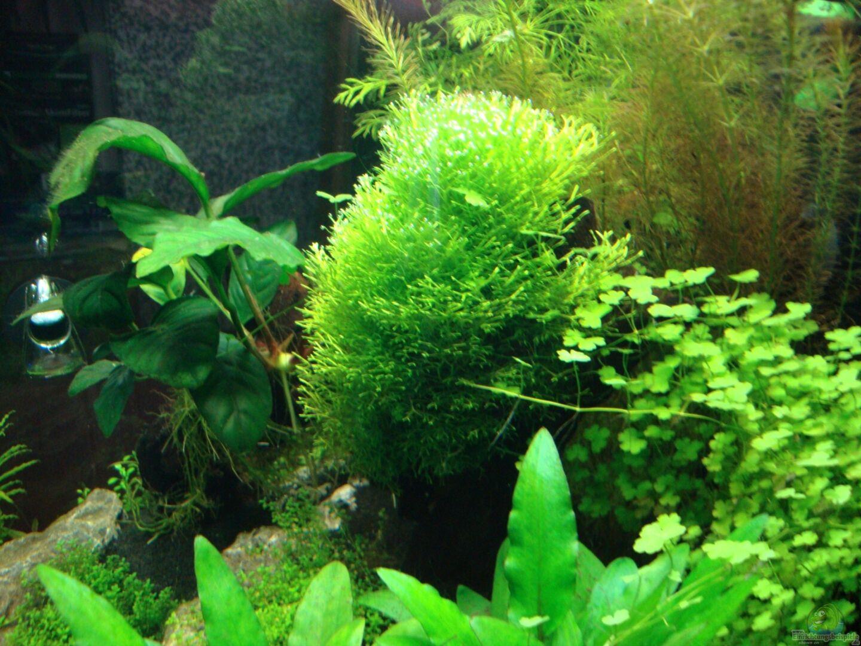 nano aquarium einrichten einrichtung pflege minifische garnelen with nano aquarium einrichten. Black Bedroom Furniture Sets. Home Design Ideas