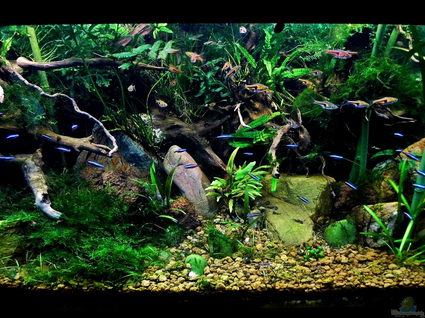 Example No 24027 From The Category Aquascaping