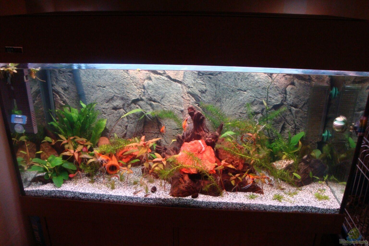 aquarium von poldi1981 200l s damerika traum. Black Bedroom Furniture Sets. Home Design Ideas